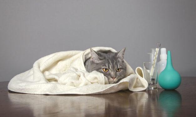 Signs Your Pet Has Seasonal Allergies