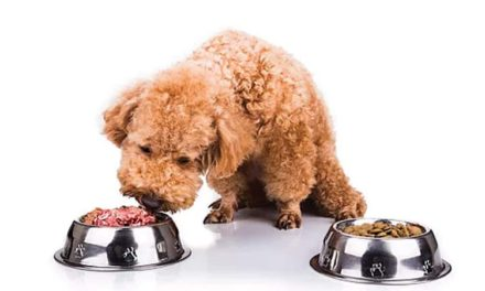 Natural VS Processed | The Raw Truth About Pet Diets