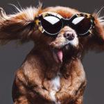 Canine Status